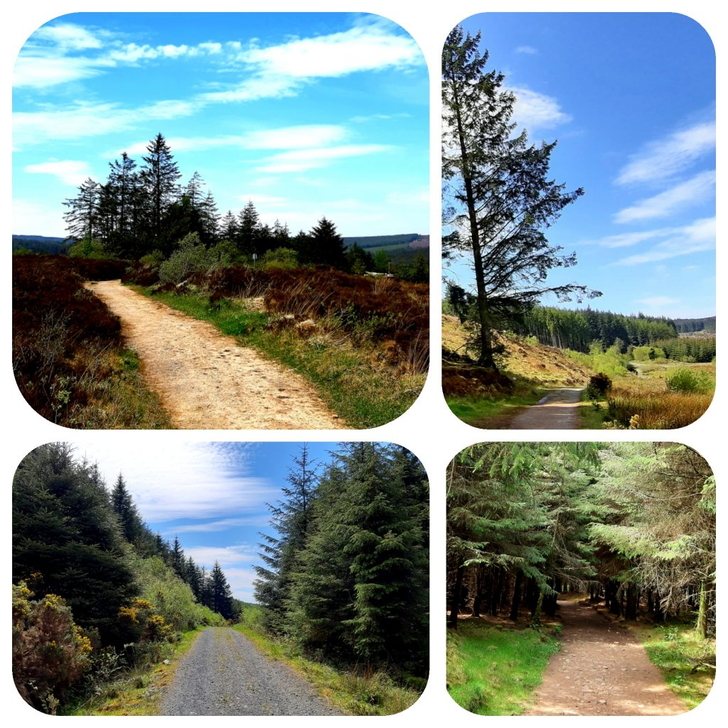 photo of trails in Slieve Bloom Mountains