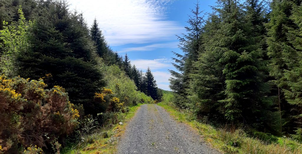 photo of trail in Slieve Blooms