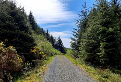 Latest Laois News: Solution needed for licence backlog affecting Laois Farm Forestry Sector claims local TD