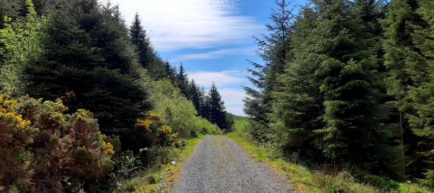 Latest Laois News: Laois gets €270K for Slieve Bloom Outdoor Amenities