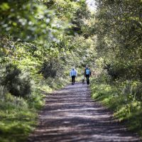 photo of walkers in distance on Abbeyleix Bog