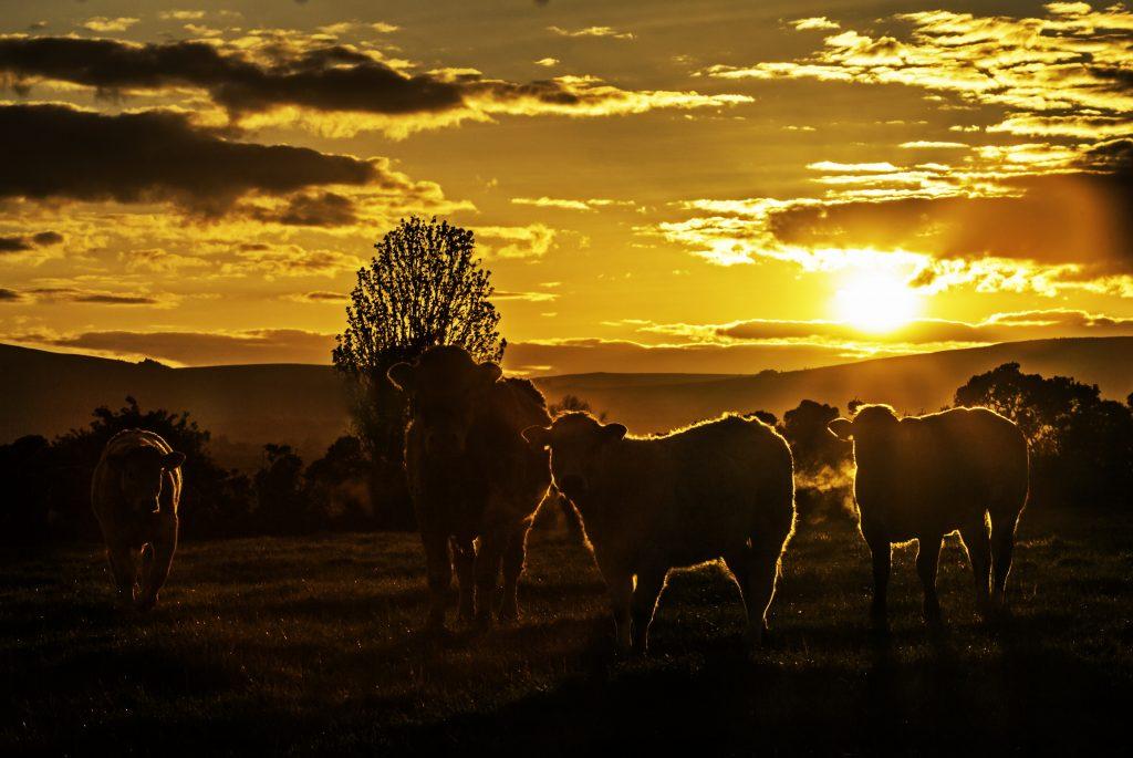 Durrow, Spink, Ballinakill & Cullohill news